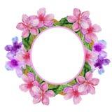 Quadro com flores da cereja Ilustração da aguarela Imagens de Stock Royalty Free