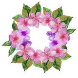 Quadro com flores da cereja Isolado Ilustração da aguarela Fotos de Stock