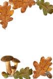 Quadro com folhas Fotografia de Stock
