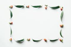 Quadro com folhas do verde e as bagas vermelhas Imagem de Stock