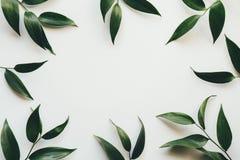 Quadro com folhas verdes Imagens de Stock Royalty Free