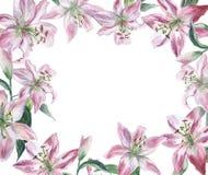 Quadro com lilys brancos da aquarela ilustração royalty free