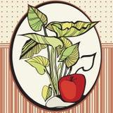 Quadro com maçãs e folhas Imagens de Stock Royalty Free