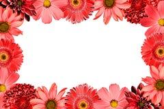 Quadro com o gerbera da mistura da colagem das flores do vermelho, crisântemo, dália, prímula, girassol decorativo isolado no bra Fotografia de Stock Royalty Free