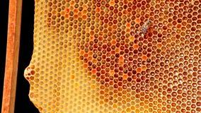 Quadro com os favos de mel da abelha enchidos com o mel Foto de Stock Royalty Free