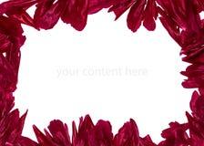 Quadro com pétalas da peônia Fotos de Stock Royalty Free