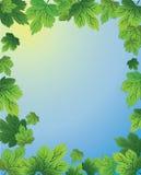 Quadro com plantas Imagens de Stock
