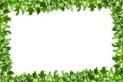 Quadro com plantas Foto de Stock Royalty Free