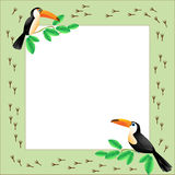 Quadro com tucanos Fotos de Stock Royalty Free