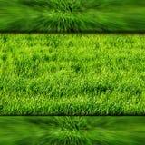 Quadro com verde e grama Imagens de Stock Royalty Free