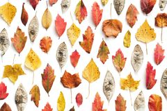 Quadro completo Autumn Pattern With Colorful Leaves fotos de stock royalty free