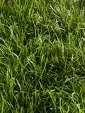 Quadro completo da grama Foto de Stock