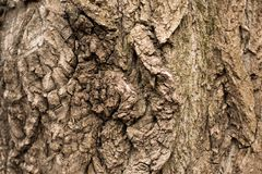 Quadro completo da textura da árvore de casca na natureza imagens de stock