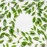 Quadro criativo da disposição, feito com ramos e as folhas verdes, configuração lisa Imagem de Stock