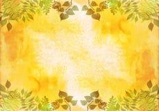 Quadro criativo para o cartaz, bandeira, cartões Elementos ervais da aquarela pintado à mão vibrante Detalhes botânicos ilustração royalty free