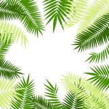Quadro 3d em folha de palmeira verde detalhado realístico Vetor Imagens de Stock Royalty Free