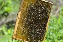 Quadro da abelha imagens de stock royalty free
