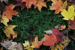 Quadro da beira das folhas de outono Imagens de Stock