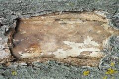 Quadro da casca de árvore Fotografia de Stock