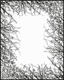 Quadro da coroa da árvore Foto de Stock