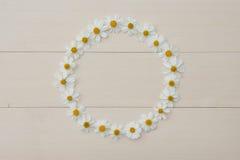 Quadro da flor branca do círculo da agulha espanhola Fotografia de Stock