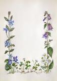 Quadro da flor da aquarela Fotos de Stock Royalty Free