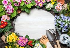 Quadro da flor da mola e das ferramentas de jardinagem Imagens de Stock Royalty Free
