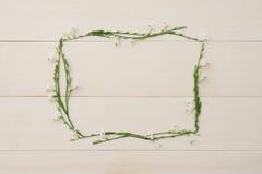 Quadro da flor do retângulo do gangetica de Asystasia Fotografia de Stock Royalty Free