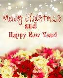 Quadro da flor da poinsétia ou da estrela cor-de-rosa do Natal fotos de stock royalty free
