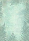 Quadro da folha da samambaia do fundo Névoa na floresta da manhã Foto de Stock Royalty Free