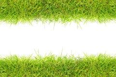 Quadro da grama Foto de Stock