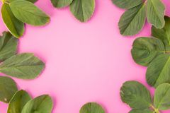 Quadro da grinalda feito das folhas isoladas no fundo pastel cor-de-rosa vista superior colocada imagens de stock royalty free