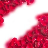 Quadro da obscuridade - pétalas cor-de-rosa vermelhas Fotografia de Stock