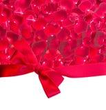 Quadro da obscuridade - pétalas cor-de-rosa vermelhas Fotografia de Stock Royalty Free