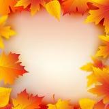 Quadro da planta das folhas de outono Molde do projeto do quadro da folha de Mapple Decoração da queda Imagens de Stock