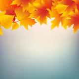 Quadro da planta das folhas de outono Molde do projeto do quadro da folha de Mapple Fundo da decoração da queda Fotografia de Stock