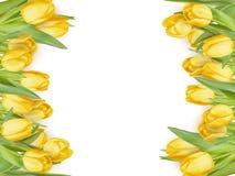 quadro da tulipa Eps 10 Fotografia de Stock