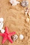 Quadro das conchas do mar da American National Standard da estrela do mar na areia Fotos de Stock