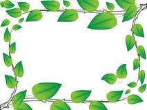 Quadro das filiais de árvore Ilustração Stock