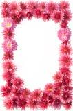 Quadro das flores Fotografia de Stock Royalty Free
