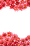 Quadro das flores Fotos de Stock
