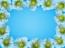 Quadro das flores brancas Fotos de Stock Royalty Free