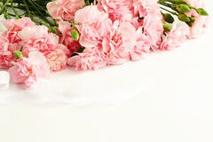 Quadro das flores cor-de-rosa do cravo Fotografia de Stock Royalty Free