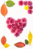 Quadro das flores e das folhas Foto de Stock Royalty Free