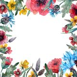 Quadro das flores selvagens da aquarela ilustração royalty free