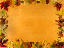 Quadro das folhas Fotos de Stock Royalty Free