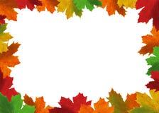 Quadro das folhas Foto de Stock