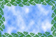 Quadro das folhas Ilustração Stock