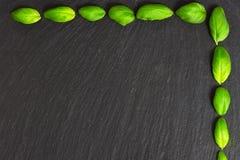 Quadro das folhas da manjericão Fotos de Stock Royalty Free