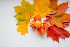 Quadro das folhas de bordo do amarelo do outono, as alaranjadas e as vermelhas, Physalis isolado no fundo branco, vista superior, fotografia de stock